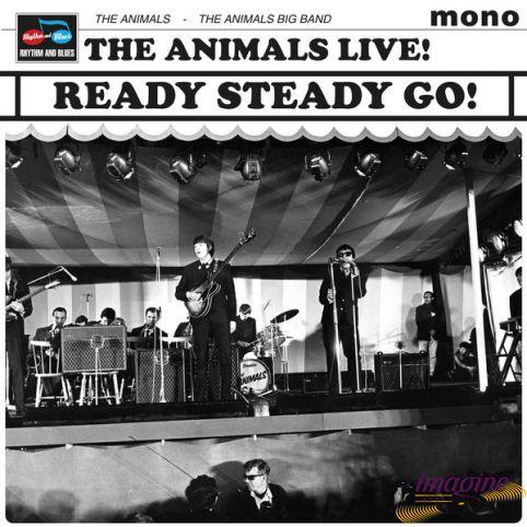 Ready Steady Go Animals