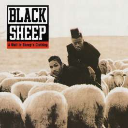 A Wolf In Sheep's Clothing Black Sheep